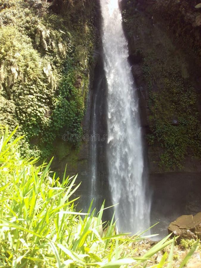 Водопад от зеленого цвета травы стоковые изображения