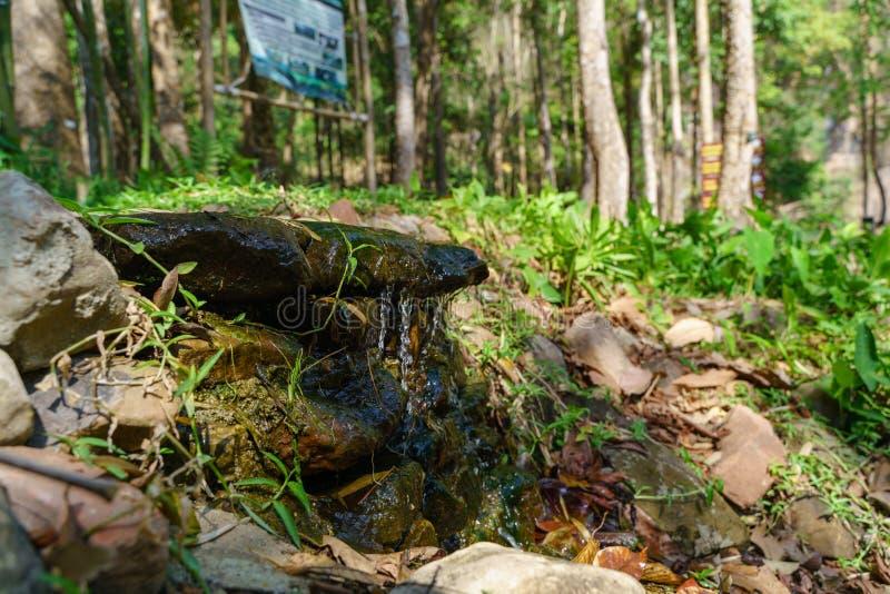 водопад пущи малый стоковые фотографии rf