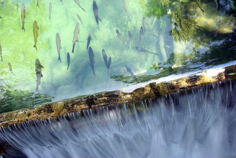 водопад рыб стоковые фото