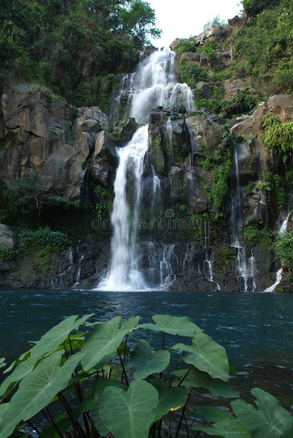водопад святой реюньона les gilles cormorans стоковое изображение rf