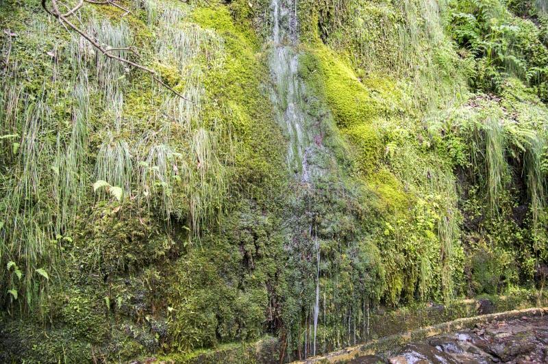 Водопад Levada Forado малый, touristic тропа, Ribeiro Frio, остров Мадейры, Португалия стоковые фото