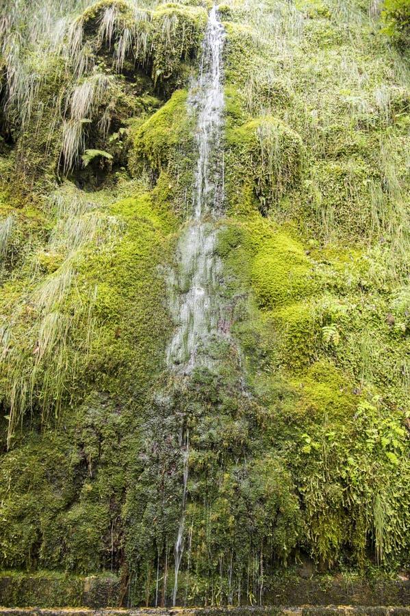 Водопад Levada Forado малый, touristic тропа, Ribeiro Frio, остров Мадейры, Португалия стоковое фото