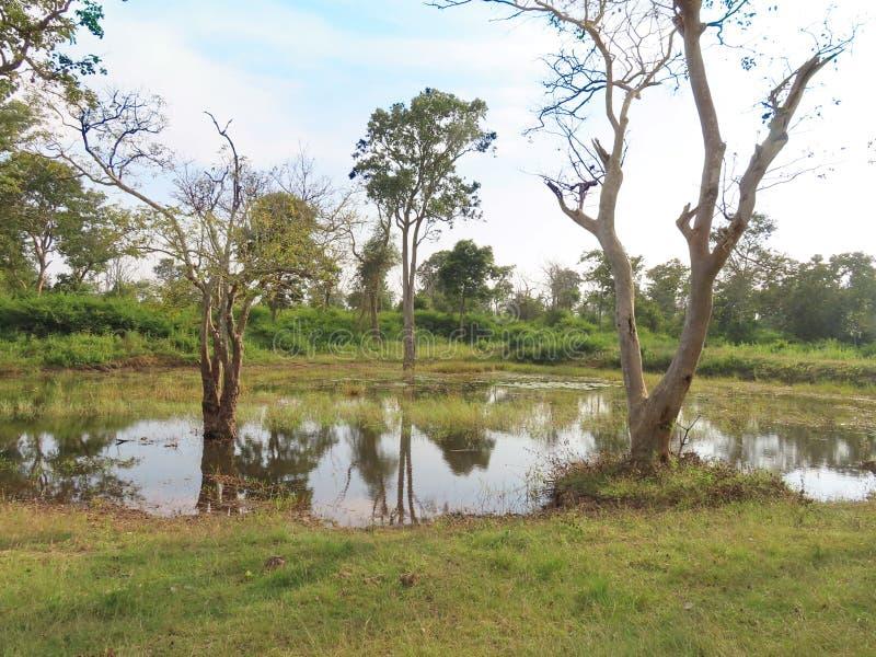 Водопой в Bandipur стоковые изображения rf