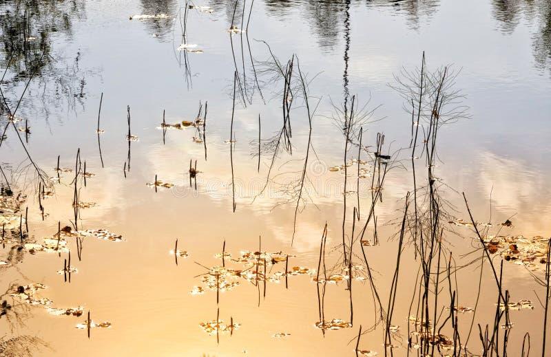 Водоросли горячей воды лета стоковые фото