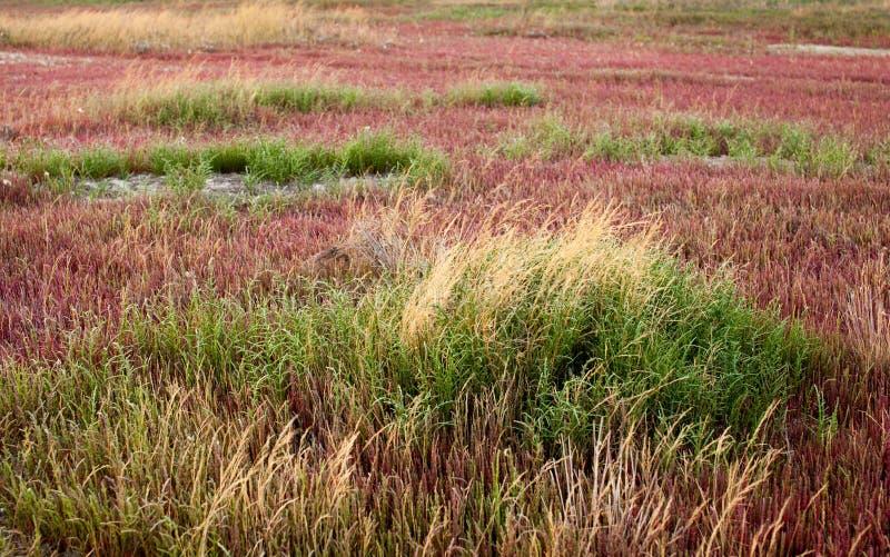 Водоросли и трава на высушенном лимане стоковое изображение rf