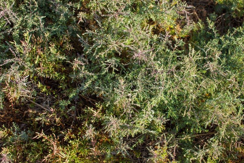 Водоросли и трава на высушенном лимане стоковые изображения