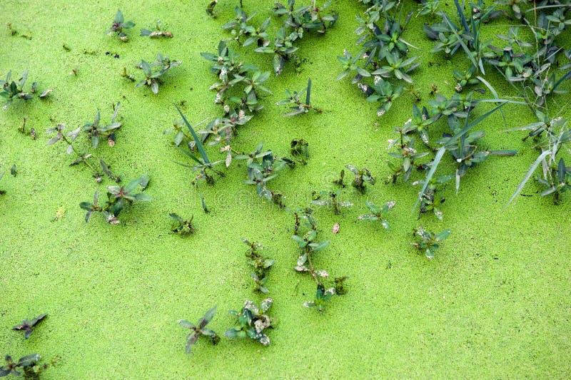 водоросли стоковое изображение rf