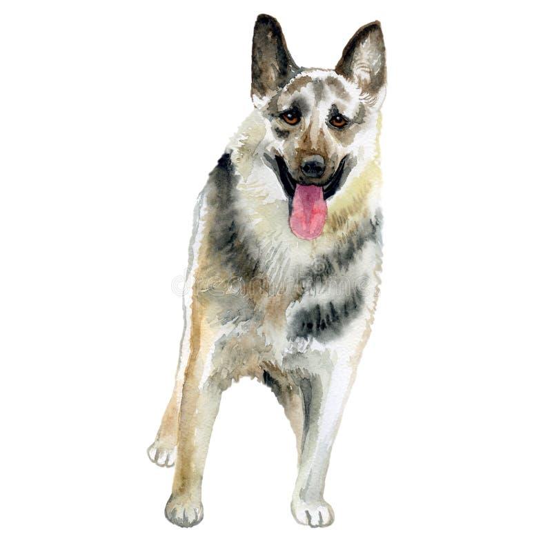 Водоцветный закрывающий портрет большой восточно-европейской породы собак, изолированных на белом фоне Большая длинноволосая рабо иллюстрация вектора