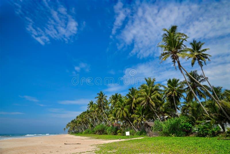 воды великобританской точной бирюзы валов вертела песка рая ладони островов острова песочной виргинские белые Sri Lanka стоковые фотографии rf