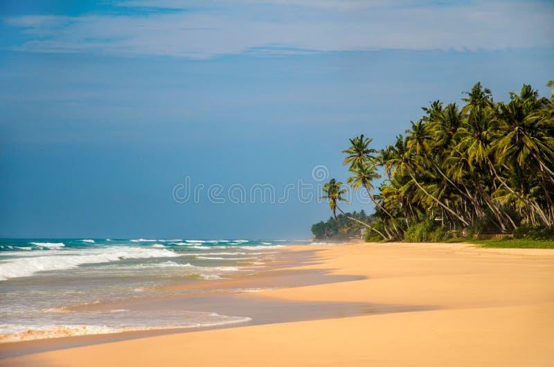 воды великобританской точной бирюзы валов вертела песка рая ладони островов острова песочной виргинские белые Sri Lanka стоковое фото rf