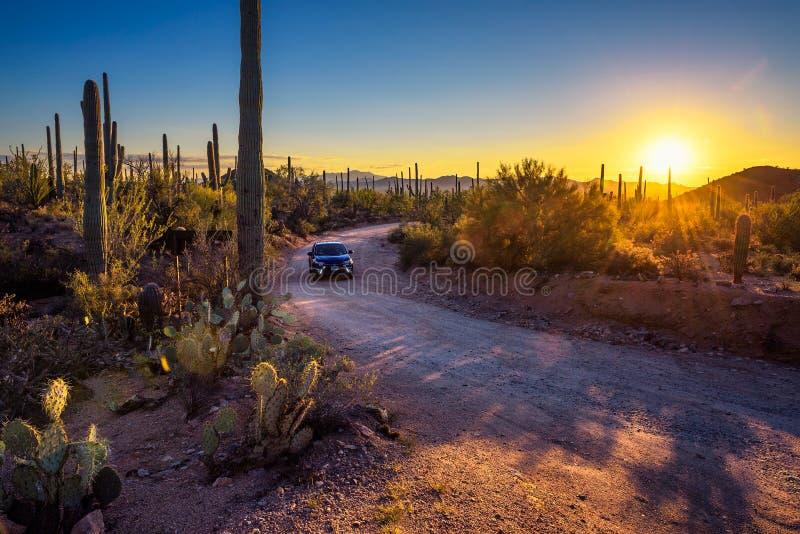 Вождение автомобиля грязная улица между кактусами национального парка Saguaro на заходе солнца стоковые фото