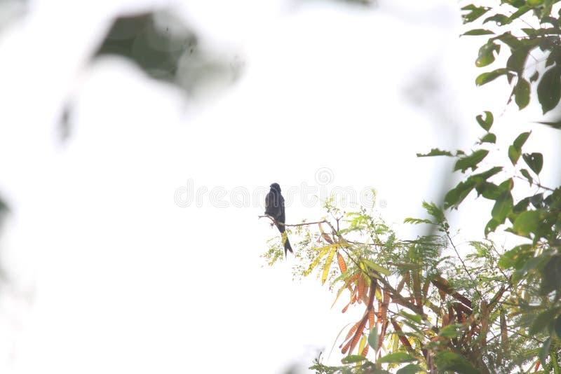 Возбужденный любопытный силуэт птицы как раз за загородкой парка над ветвью дерева Длинный хвост другой значительный аспект стоковые изображения