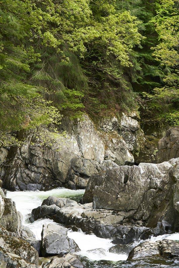 Возгоняйте гору forrest с быстрым пропуская национальным парком Snowdonia реки, Великобританией стоковое фото rf
