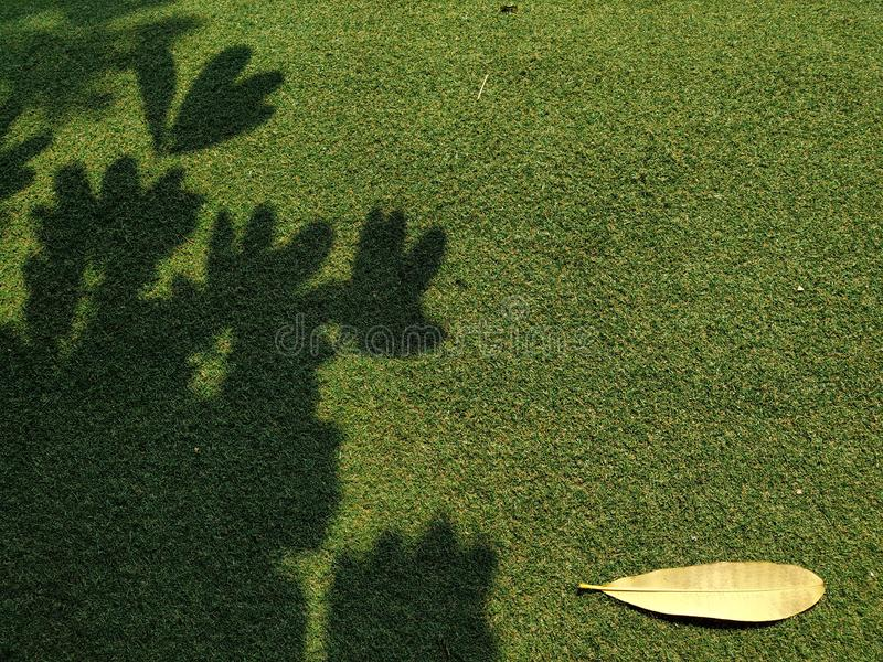 Воздух в полдень под тенью больших деревьев стоковая фотография rf