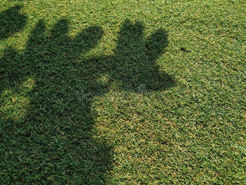 Воздух в полдень под тенью больших деревьев стоковое изображение