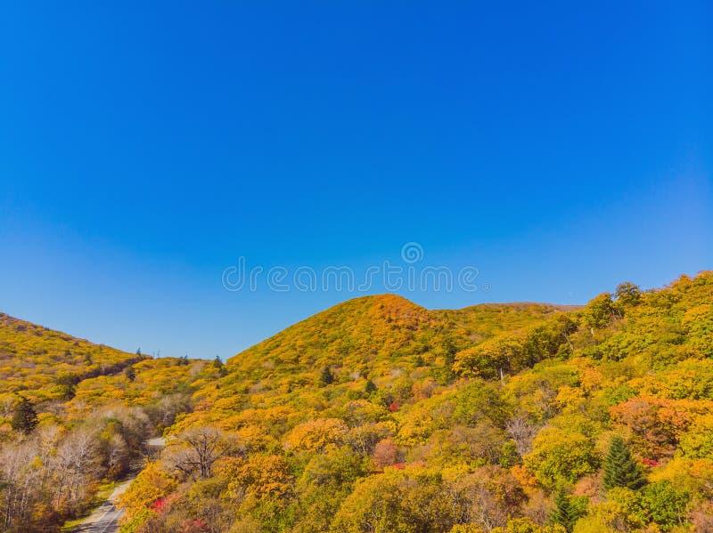 Воздушная верхняя часть вниз с взгляда леса осени с зелеными и желтыми деревьями Смешанное падение лиственного и coniferous леса  стоковые изображения rf