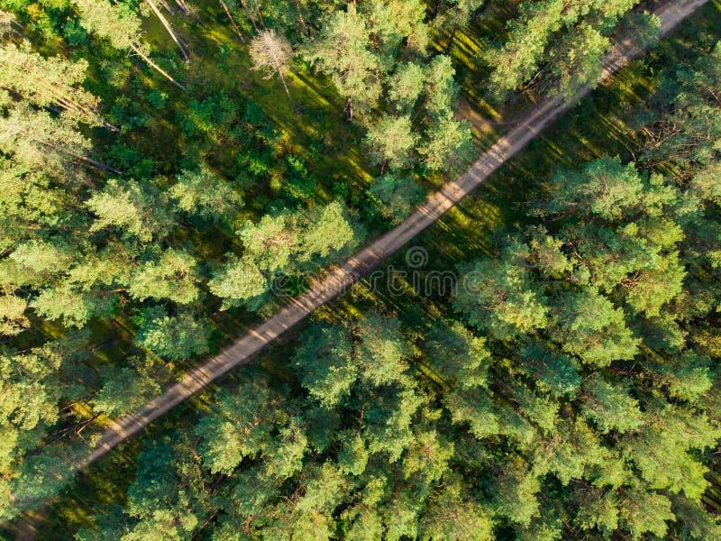 Воздушная верхняя часть вниз с взгляда леса с путем среди сосен Красивый пейзаж падения около города Вильнюса, Литвы стоковая фотография rf