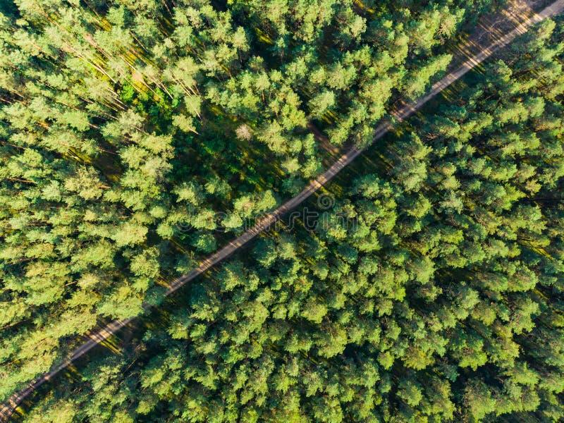 Воздушная верхняя часть вниз с взгляда леса с путем среди сосен Красивый пейзаж падения около города Вильнюса, Литвы стоковое изображение