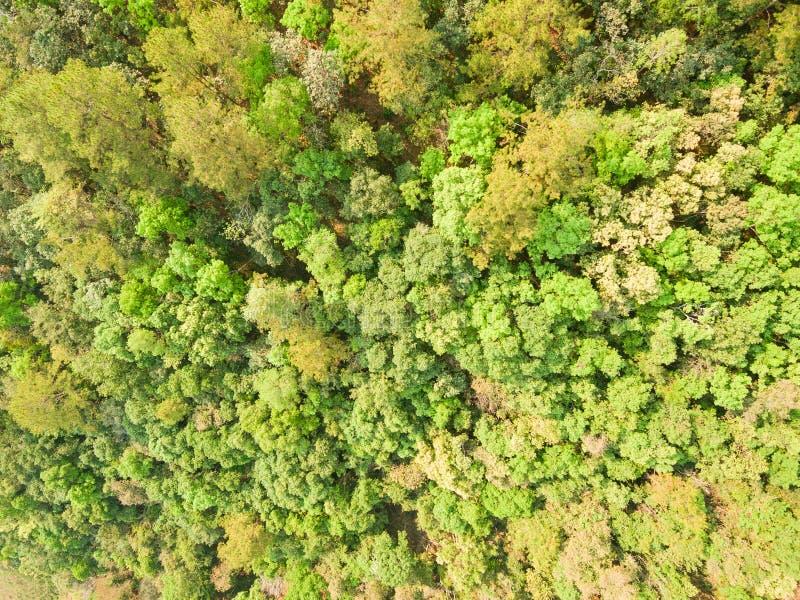 Воздушная съемка зеленых джунглей стоковая фотография rf