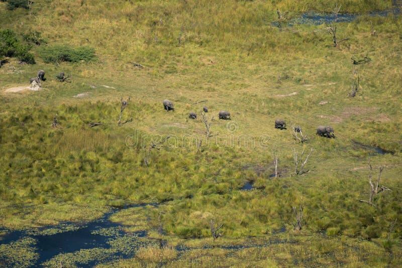 Воздушная съемка от группы в составе слоны в перепаде Okavango стоковое фото rf