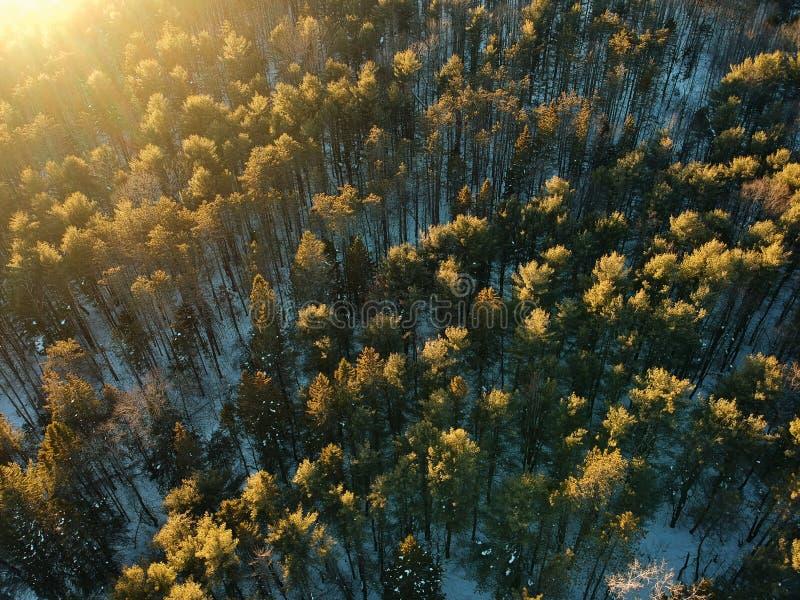 Воздушная съемка трутня солнца осветила лес зимы стоковое изображение rf