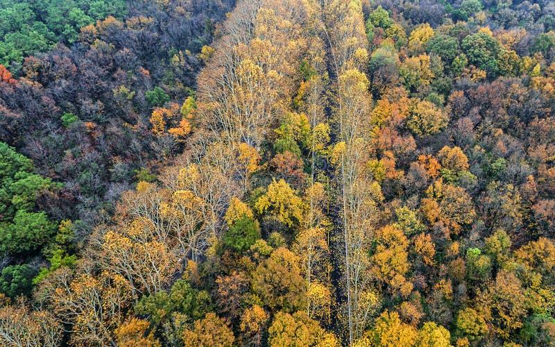 Воздушное фотографирование - пейзаж осени ботанического сада стоковые фотографии rf