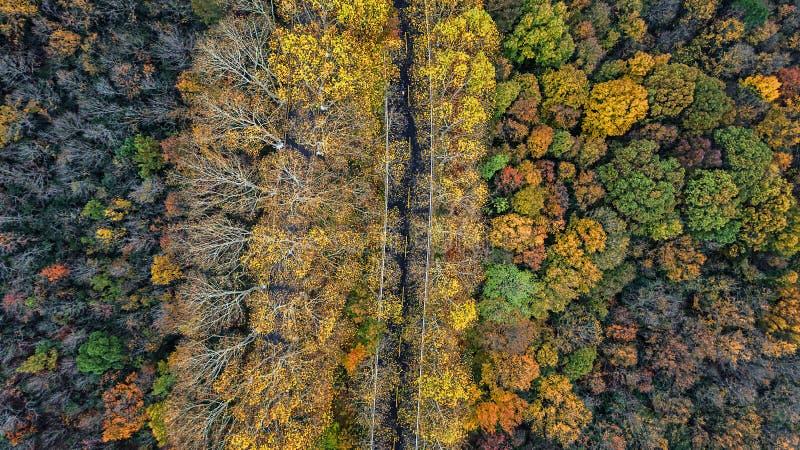 Воздушное фотографирование - пейзаж осени ботанического сада стоковое фото rf