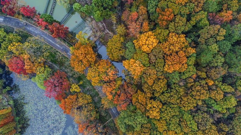 Воздушное фотографирование - пейзаж осени ботанического сада стоковые изображения rf