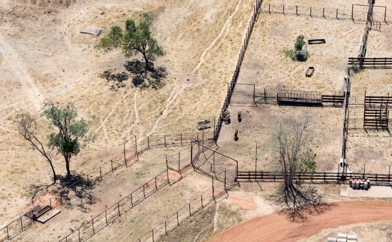 Воздушное фото скотоводческого хозяйства стоковое фото