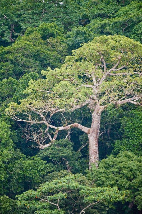 воздушные джунгли тропические стоковые изображения rf