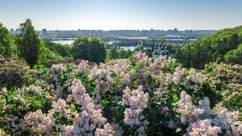Воздушный взгляд сверху города Киева и парка ботанического сада сверху, цвести сирени и городского пейзажа Киева, Украины стоковое фото rf