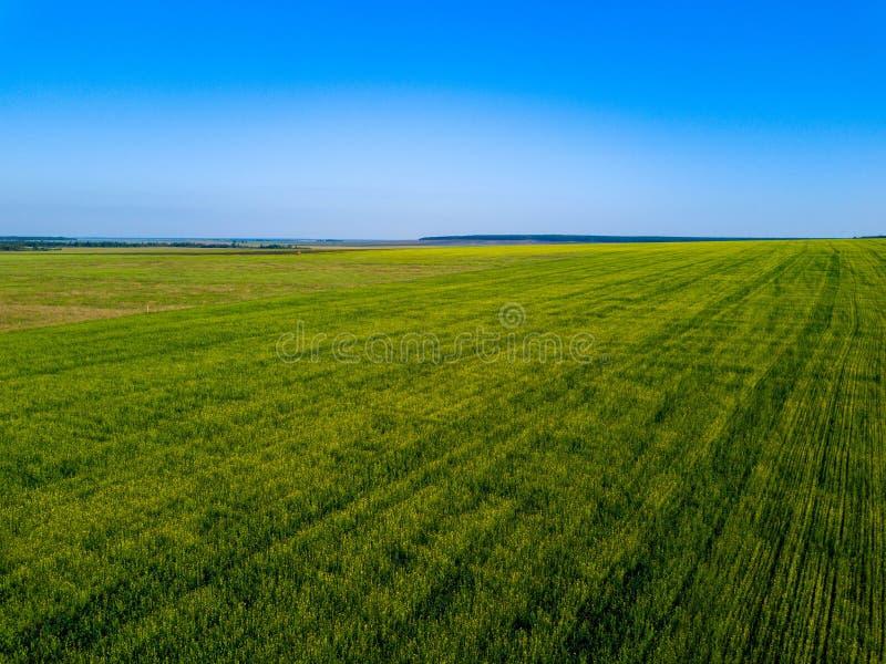 Воздушный взгляд трутня зеленого поля, ширей России стоковое изображение