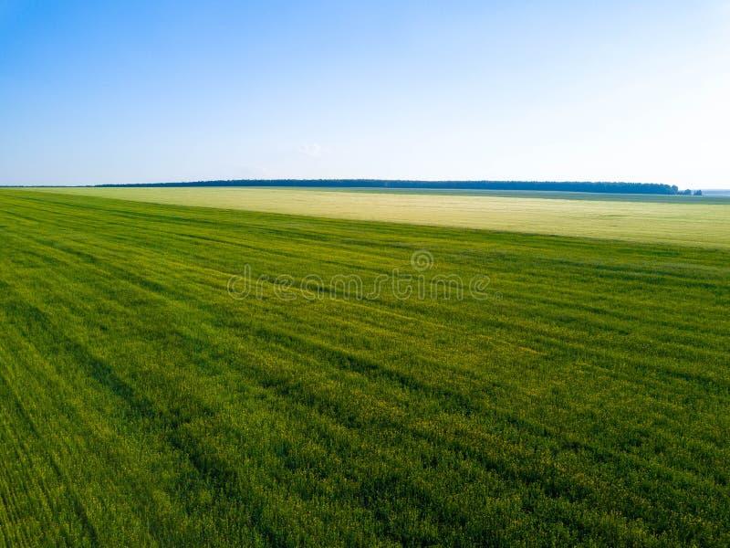 Воздушный взгляд трутня зеленого поля, ширей России стоковая фотография