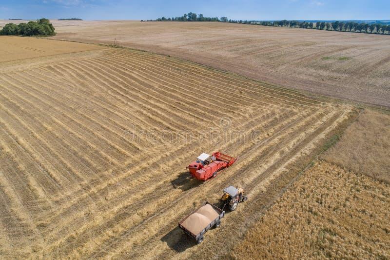 Воздушный взгляд трутня зернокомбайна жатки работая на поле стоковое фото