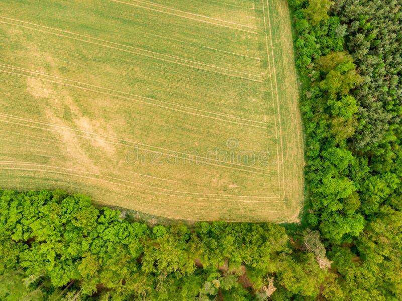 Воздушный взгляд трутня поля, деревьев и леса в земле земледелия Верхний взгляд к лугу около деревни и фермы Красивое зеленое све стоковая фотография