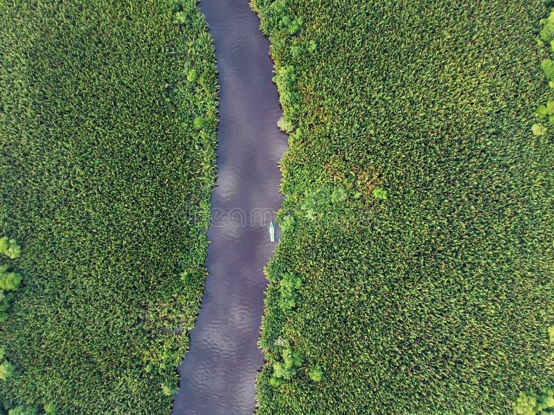 Воздушный идущий сверху вниз взгляд реки и джунглей с ладонями, лесом, деревьями и шлюпкой klotok в восточном Kalimantan Борнео - стоковое фото