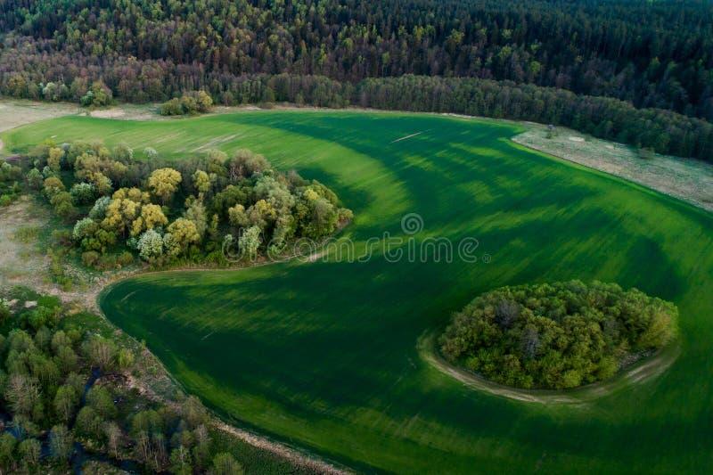Воздушный ландшафт зеленых поля и леса стоковая фотография rf