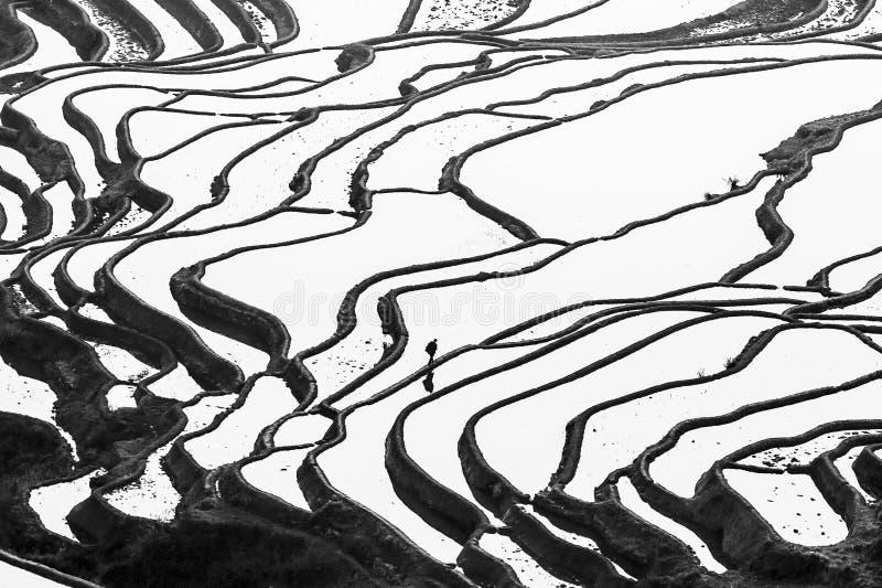 Воздушный потрясающий вид террас на восходе солнца, мужчины риса Yuanyang Hani племени работая в terracing риса Юньнань, Китай Че стоковая фотография