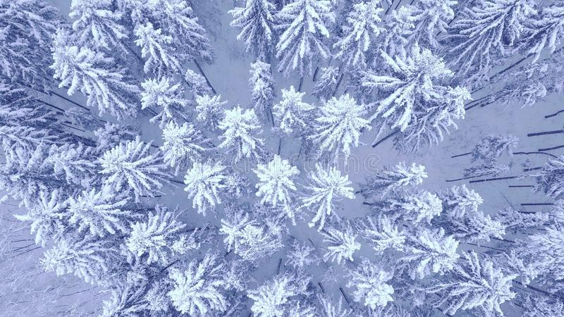 Воздушный спуск вверх по видео сигнала камеры красивого голубого снег стоковое изображение
