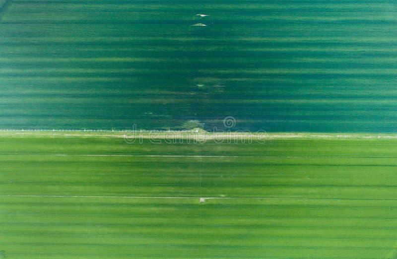 Воздушное изображение зеленых полей стоковые изображения rf