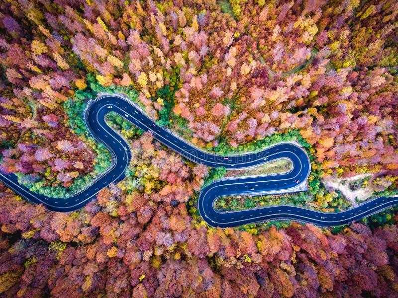 Воздушный взгляд трутня изогнутой извилистой дороги через лес высокий стоковые изображения rf