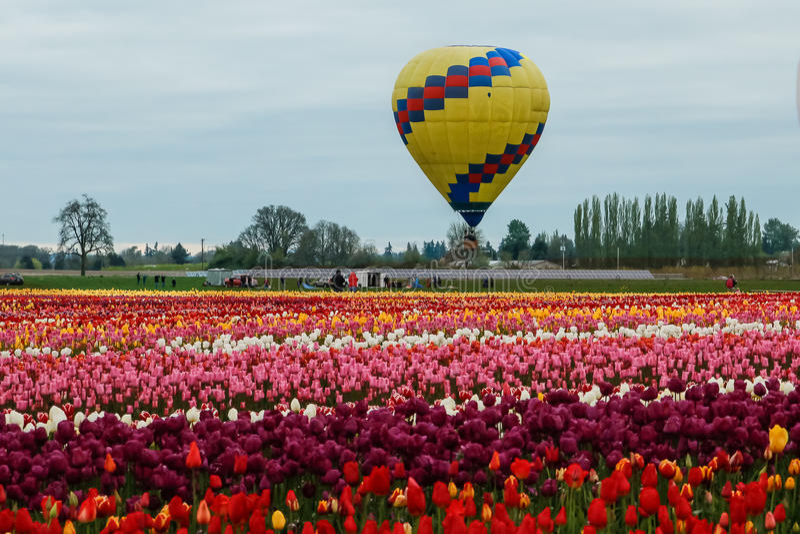 Воздушный шар перспективы над зацветая полем стоковая фотография