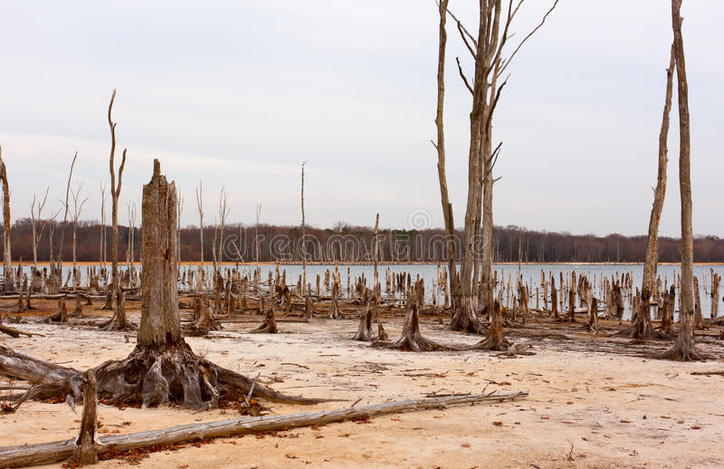вокруг мертвых валов озера стоковые изображения