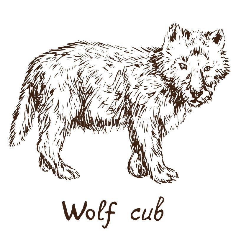 Волк тимберса серого волка или западный новичок волка, doodle руки вычерченный иллюстрация штока