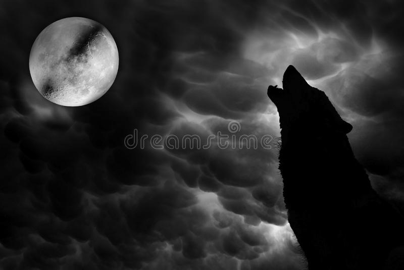 волк иллюстрация штока