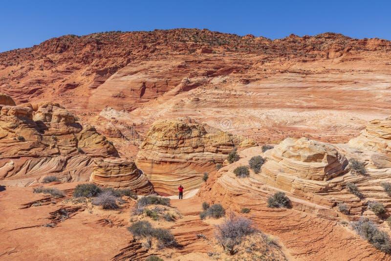 Волна, Buttes койота, Аризона, Соединенные Штаты стоковое фото