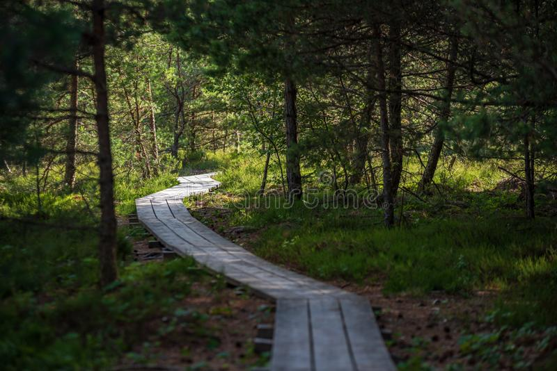 волнистое деревянное foothpath в следе леса болота туристском стоковая фотография