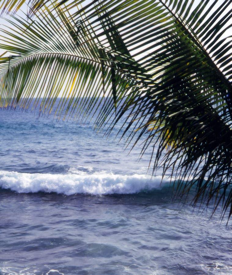 волны ладони fronds стоковая фотография rf