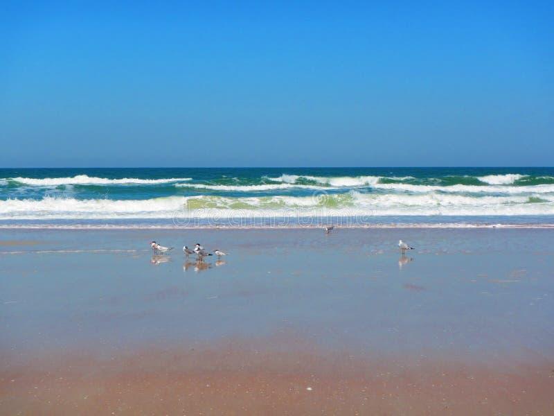 Волны свертывая в Daytona Beach, Флориде стоковое фото