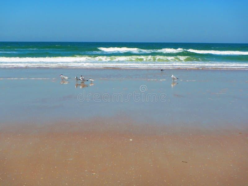 Волны свертывая в Daytona Beach, Флориде стоковые фотографии rf